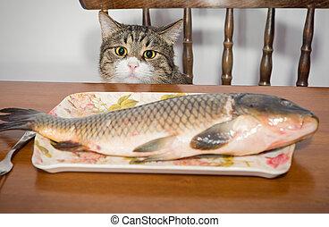 grand poisson, chat