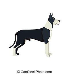 grand, race, -, chien, illustration, arrière-plan., vecteur, danois, blanc