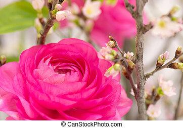 grand, rose, ranunculus