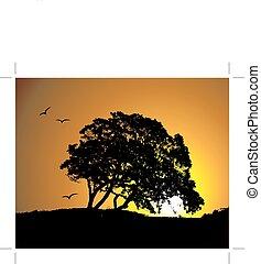 grand, silhouette, coucher soleil, arbre, fond