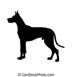 grand, silhouette, danois, chien
