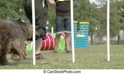 grand, sur, obstacles, chien, à poil, croisement