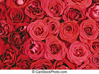 grand, tas, roses rouges