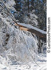 grand, tempête neige, pouvoir revêt, après, arbre, bas, traction