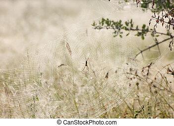 grand, toile, araignés