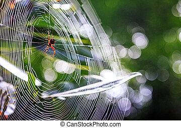 grand, toile, closeup, araignés
