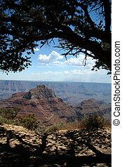 Grand Tree Overlook