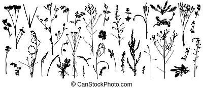 grand, vecteur, sauvage, silhouettes., mauvaises herbes, usines, ensemble, illustration., nu