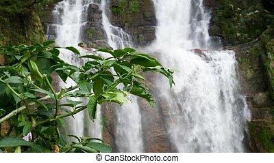grand, vidéo, jungle, suivant, croissant, forêt, waterful, ...