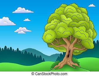 grande, árvore frondosa, paisagem