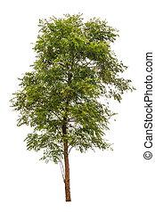 grande, árvores verdes, isolado, branco, fundo