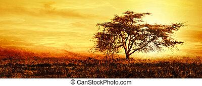 grande, albero africano, silhouette, sopra, tramonto