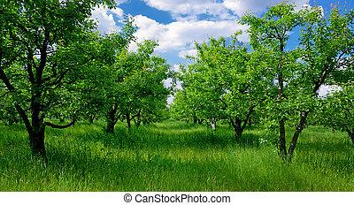 grande, albero, campo