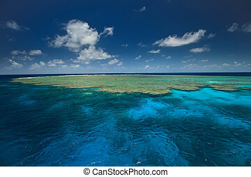 grande, almeja, barrera, arriba, arrecife, cierre, jardines