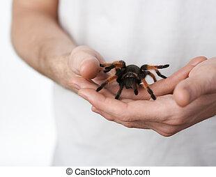 grande, araña, mano