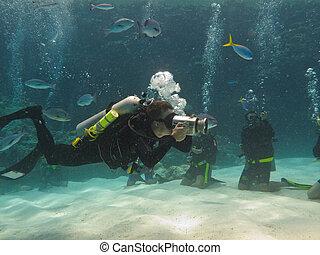 grande, australia, barrera, escafandra autónoma, arrecife, ...