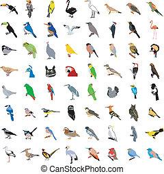 grande, colección, de, aves