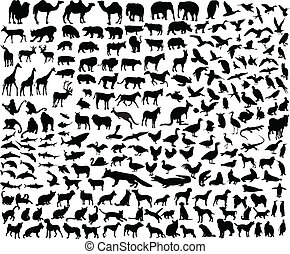 grande, colección, de, diferente, animal