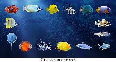 grande, colección, de, un, pez tropical