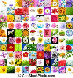 grande, colección, images), 100, flores, (set
