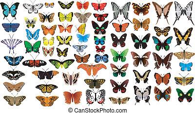 grande, collezione, di, farfalle