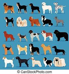 grande, conjunto, de, perros