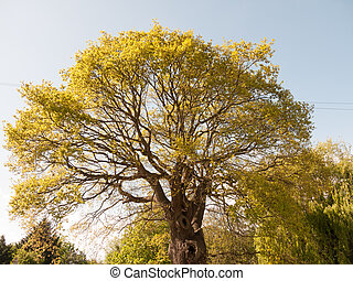 grande, exuberante, árbol, exterior, en, luz sol, con, hojas