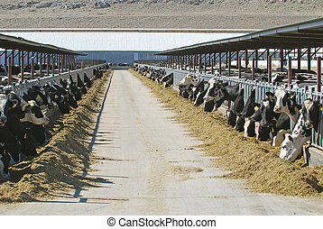 grande, fazenda leiteria