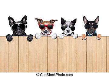 grande, fila, de, cachorros