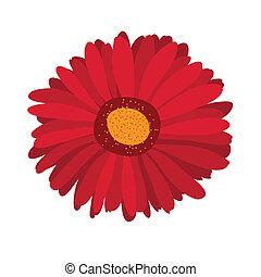 grande, fiore dentellare, gerbera, sullo sfondo