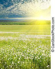 grande, fiori, sunrise., campo