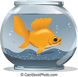 grande, goldfish, em, um, pequeno, tigela