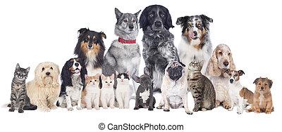grande, grupo, animais estimação