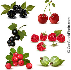 grande, grupo, de, fresco, bayas, y, cherries., vector,...