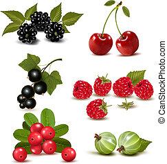 grande, gruppo, di, fresco, bacche, e, cherries., vettore,...