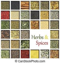 grande, hierbas, especias, colección
