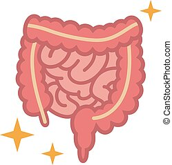 grande, intestino delgado, ilustração