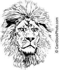 grande, león, melena