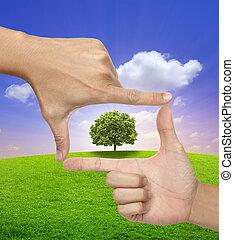 grande, marco, árbol, humano, Manos