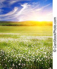 grande, nature., sunrise., campo, fiori, composizione