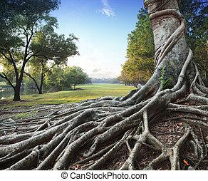 grande, parque, árbol verde, raíz