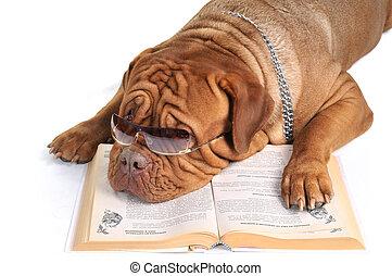 grande, perro, leer un libro