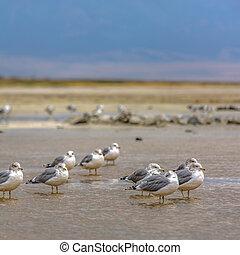 grande, poco profondo, acqua lago, gregge, sale, uccelli
