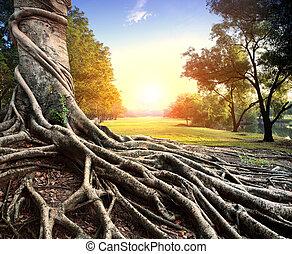 grande, raiz, árvore, em, parque verde