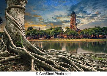 grande, raiz, de, árvore banyan, terra, scape, de, antiga, e, antigas, pagode, em