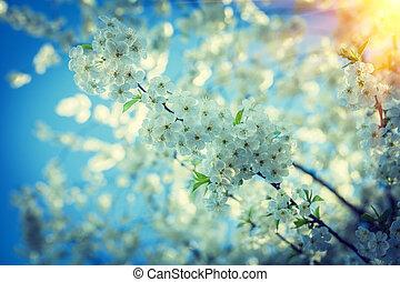 grande, ramo, de, florescer, árvore cereja, em, pôr do sol, instagram, stile