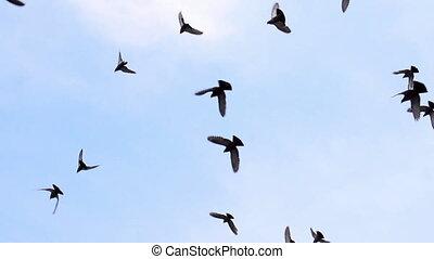 grande, rebanho pássaros