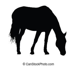grande, ritratto, cavallo, silhouette, pascolo