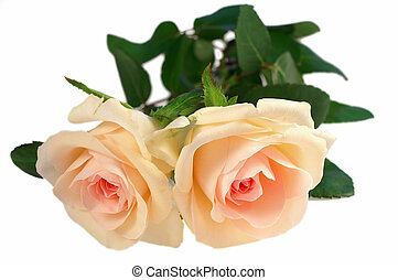 grande, rosas