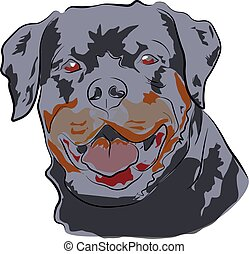 grande, rottweiler, cabeza